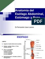 6 Esofago, Estomago y Bazo (Dr. Llave) Clase 6