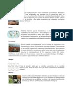 Glosario de Ecología.docx