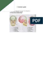 Anatomie - Scheletul