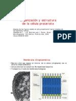 PDF Celula Procarionte