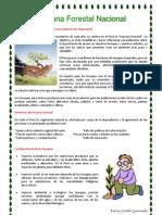Semana Forestal Nacional