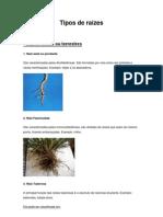 Tipos de raízes e Caules