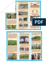 Mangrove Plantation