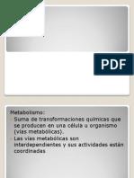 metabolismo.pptx
