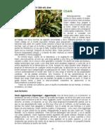 93353463-santeria-06.pdf
