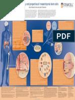 Identity & Properties of Mesenchymal Stem Cells