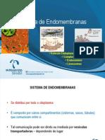 AULA_Sistema de Endomembranas