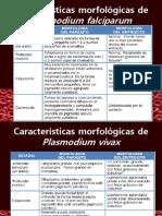 Mofolog a Del Falciparum y Vivax