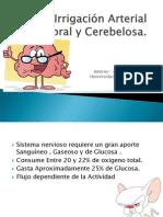 Irrigación Arterial  Cerebral y Cerebelosa2