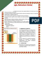 Biologia Tema 5 La Citologia Estructura Celular
