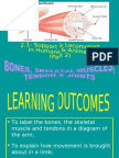 2.1 (b) - Role of Muscles, Ligaments & Tendons In