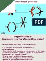 Ligamiento y recombinación.ppt