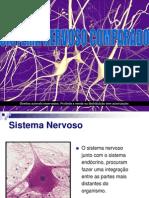 Sistema Nervoso Comparado