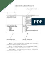 Gfi - Analiza Pe Baza Bilantului Financiar