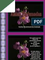 Almas Perfum a Das