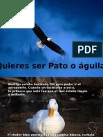 Quieres Ser Pato o Aguila