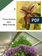 Flores_para as Maes