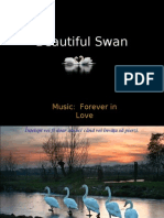 Beautiful Swan (1) (1)