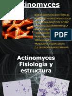 actinomes