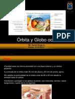Orbit Ay Globo Ocular