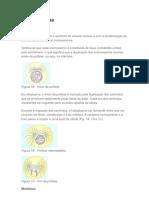 Mitose e Meiose Fases