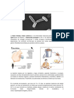 Fiebre tifoidea.docx