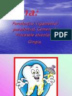 Ciment Ligament
