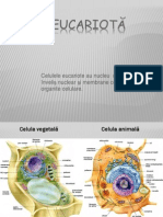 0celulaeucariota