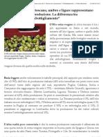 Gli Oli Extra Vergini Toscano, Umbro e Ligure