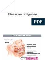 Glande Anexe Digestive