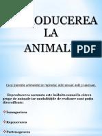 Reproducerea La Animale