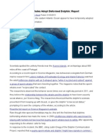 Whales Adopt a Dolphin