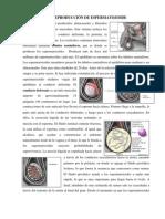 Ciencias Naturales - Produccion de Espermatozoides y Ovulos