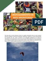 Aves Migratorias en Aeropuertos