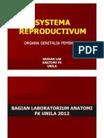 SYSTEMA REPRODUCTIVUM