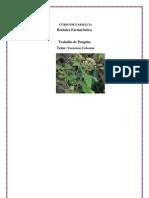 vernonia colorata 2