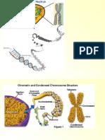 Biologie Moleculara