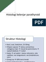 Histologi kelenjar parathyroid