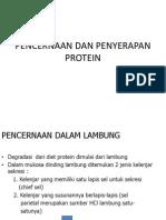 Pencernaan n Penyerapan Protein