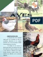 domesticación de aves