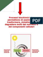 7 Metabolismo bioenergetica