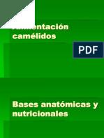 Alimentación camélidos (1)