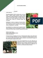 Sector Sanidad Animal (1)
