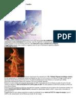 ADN Y EMOCIONES Experimento Científico