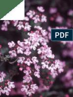 6.Plantas Titaguas.pdf