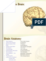 Brain Anatomy Research