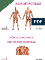 Musculos Torax c Escapular