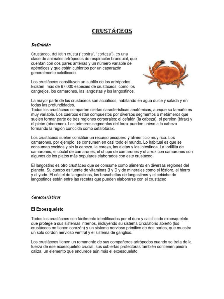 Atractivo Salmuera Anatomía Camarones Viñeta - Imágenes de Anatomía ...