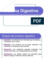 2013aparato_digestivo