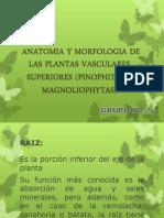 Diapositivas Anatomia y Morfologia de Las Plantas Vasculares